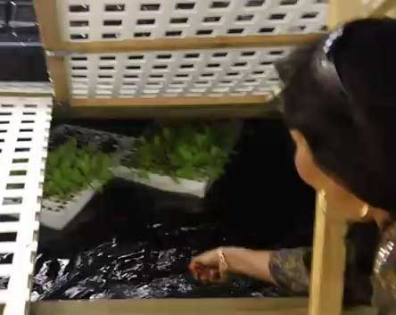 Sahib's Aquaponic Research Fish Farm
