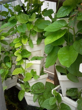 Using Soil in Aquaponics